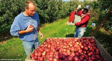 Melihat Bagaimana Negeri Paman Trump Menjaga Harga Jual Petani