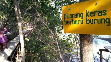 Menyelamatkan Hutan Bakau di Pulau Bawean